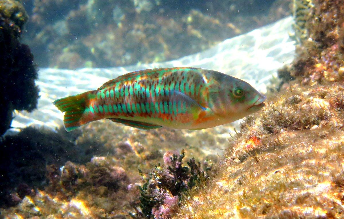 Snorkeling in Rocky Bay, Park Rynie, KZN, South Africa