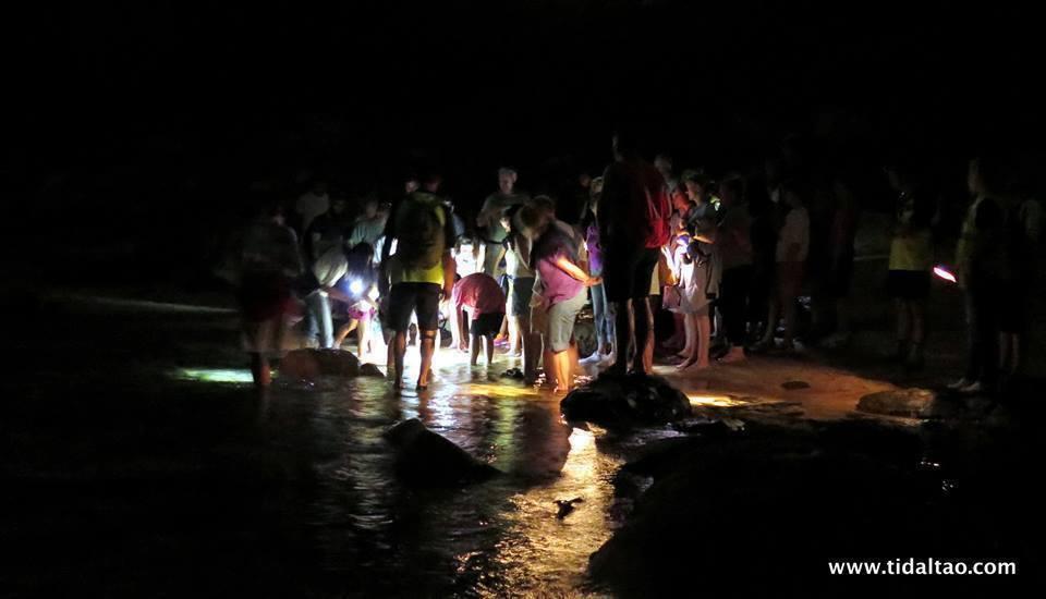 Rocky Shore Walks & Night Walks