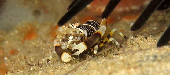 shrimp-south-africa