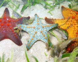 6 Facts About Starfish You May Not Have Known