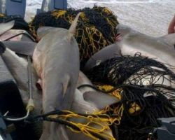 How Your Tax Payers Money Is Used To Kill Our Oceans